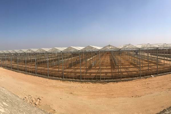 Greenhouse for Cherry Tomatoes in Egypt