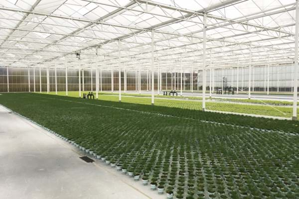 Greenhouse for vegetable seeds in the Netherlands