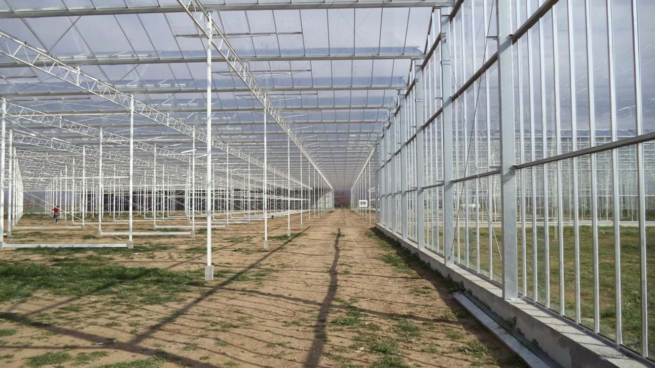 Greenhouse for growing tomatoes in Turkey