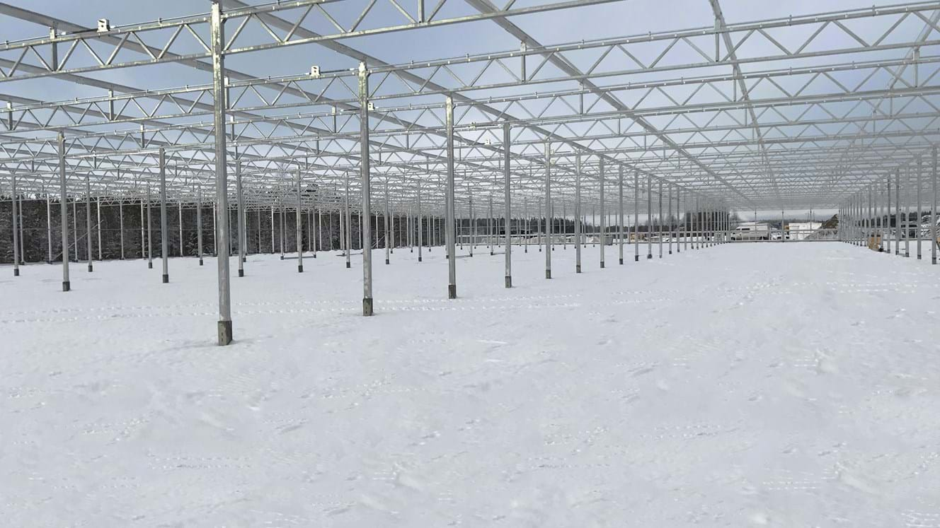 Greenhouse for growing tulips in Finland