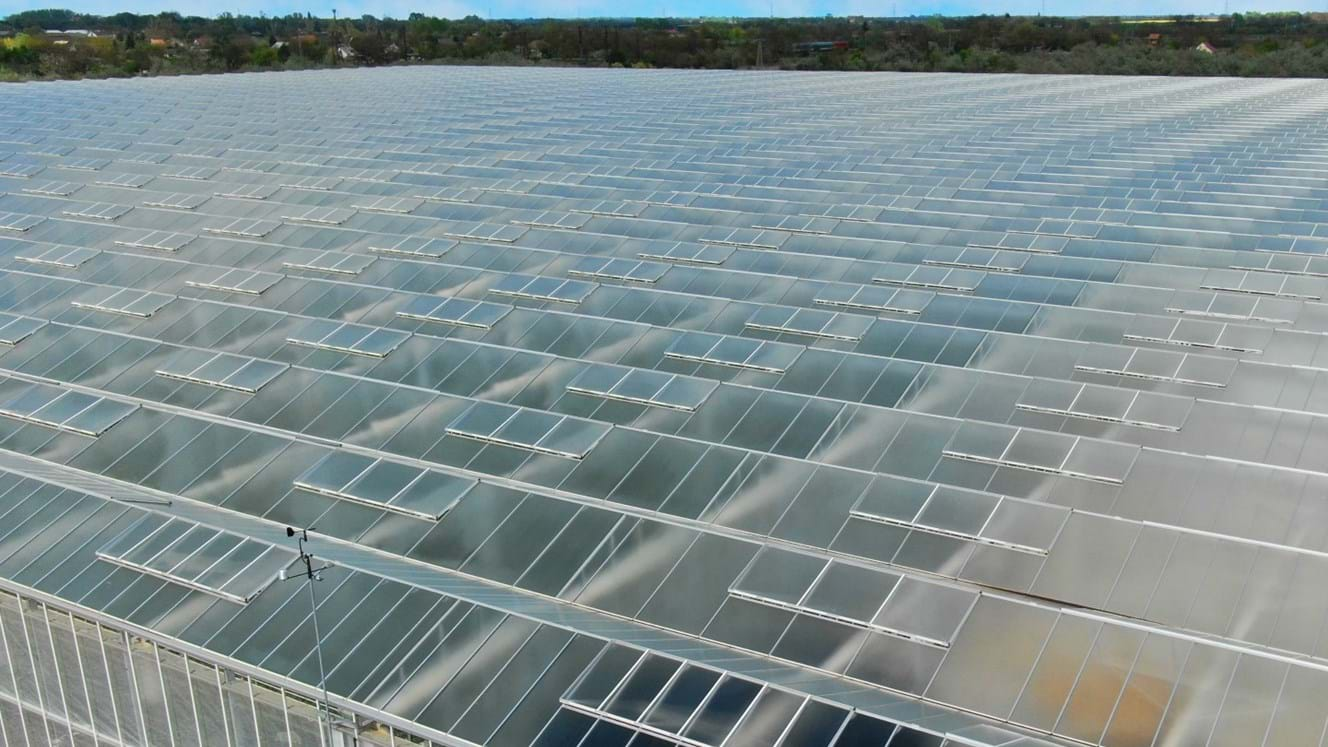 Greenhouse for growing tomatoes in Hungary