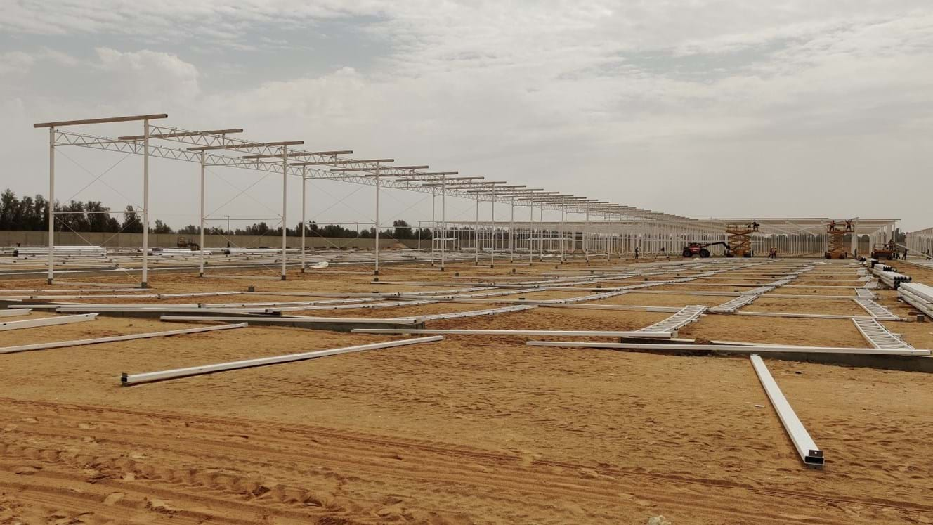 Greenhouse for growing tomatoes, cucumbers and peppers in Saudi Arabia